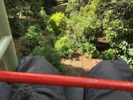 Edward's knees, Cataract Gorge